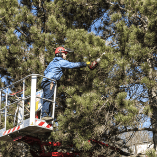 Tree Services Spring Farm